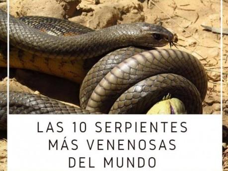 Cuáles Son Las 10 Serpientes Más Venenosas del Mundo