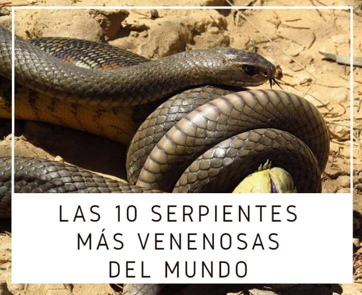10 serpientes mas venenosas del mundo