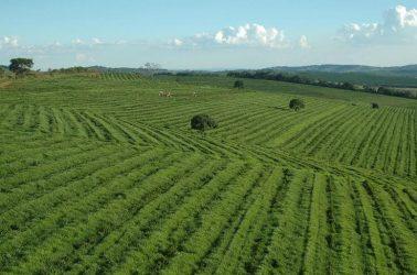Agricultura Industrial Características