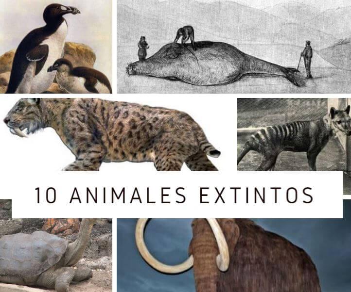 Animales que estan Extintos
