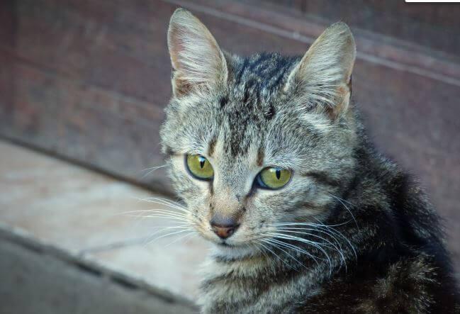 Como Hacer Para Que El Gato No Orine En La Casa,