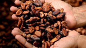 Es lo mismo cacao y cocoa