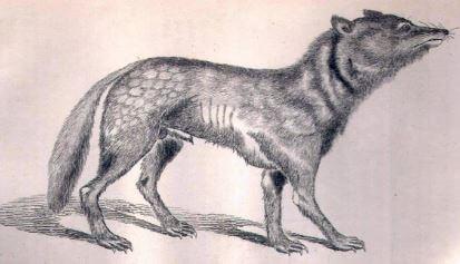Honshu japones animal extinto